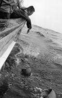 ボールを海に置く身を乗り出して.jpg
